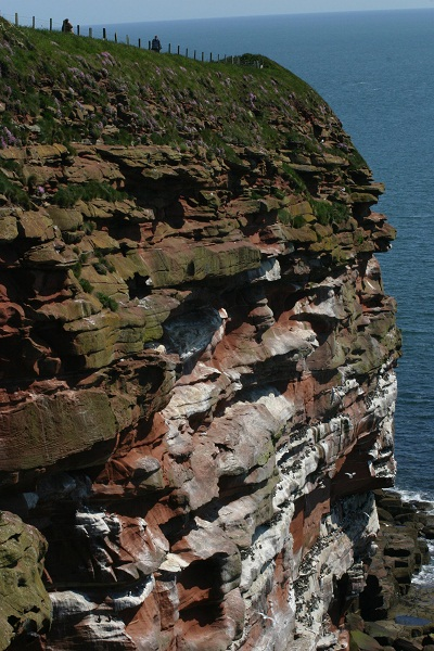 St Bees Head Seabird monitoring plots