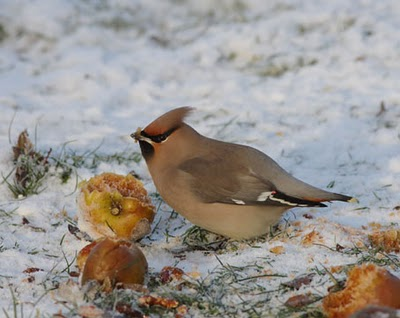 Waxwing Dalston, Nick Franklin